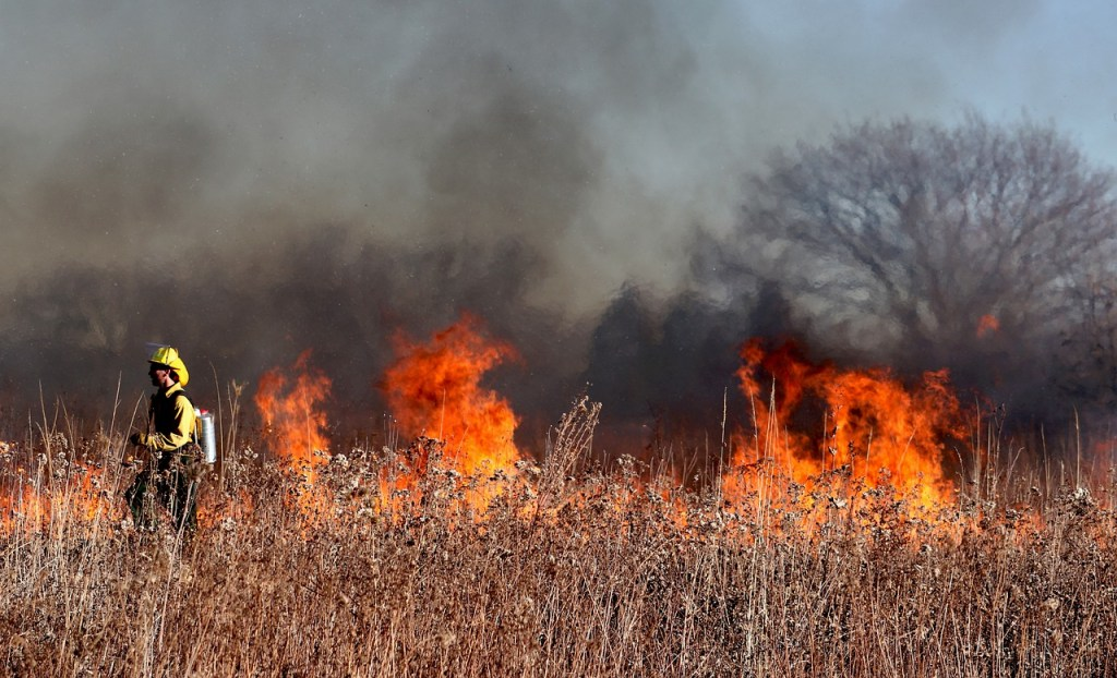 firefighter, fire, flames-5799151.jpg