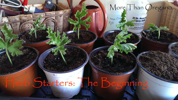 Herb Starters: The Beginning