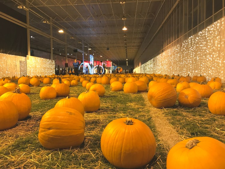 Harvest Glow Langley