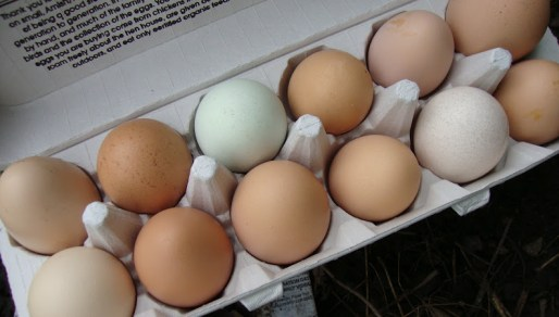 Trading Granola for Eggs or My Urban Batering  (TEST POST)