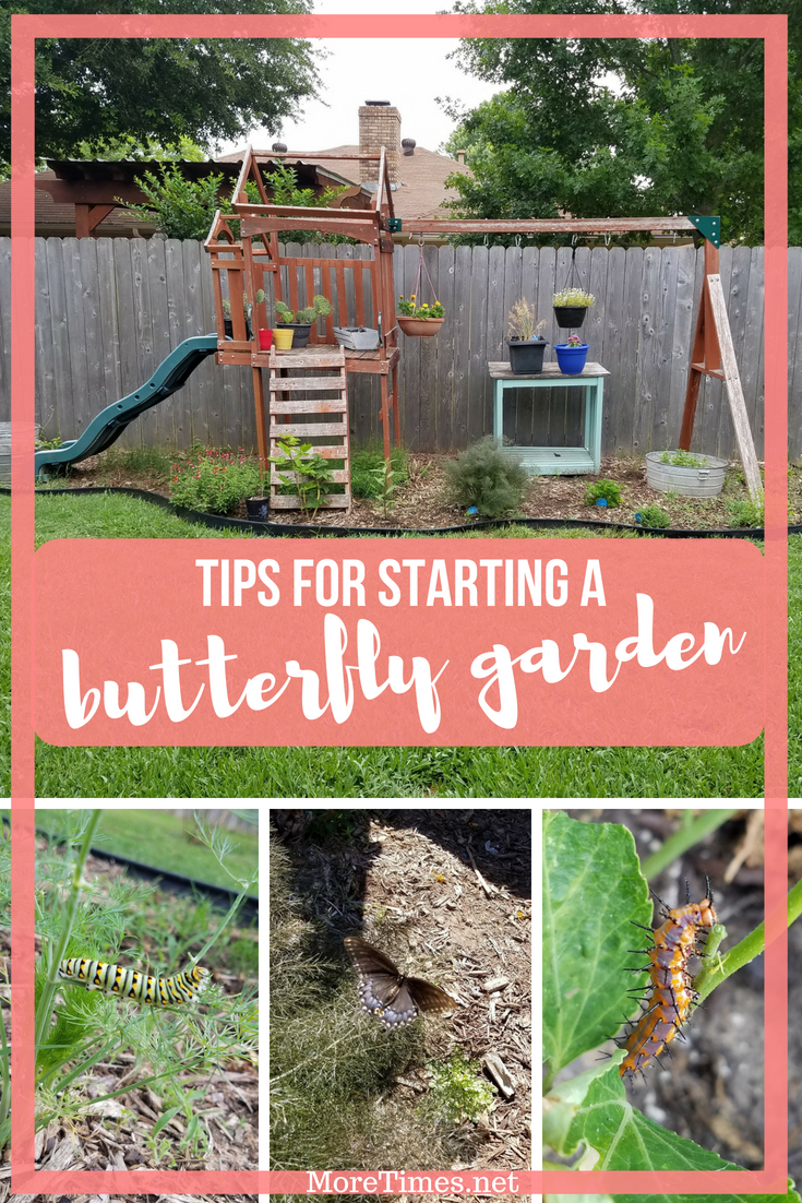 Delicieux How To Start A Butterfly Garden » More Times