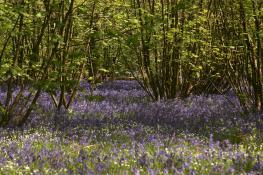 Everdon_Stubbs_Woods_3_may_2014_16