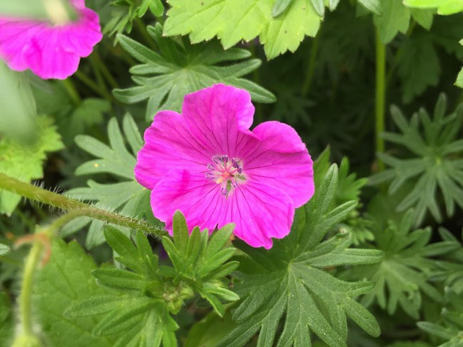 Flowers_10_resized