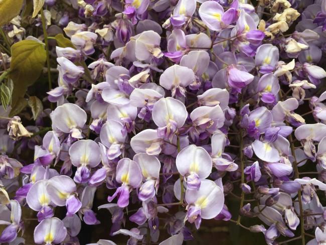 Flowers_11_resized