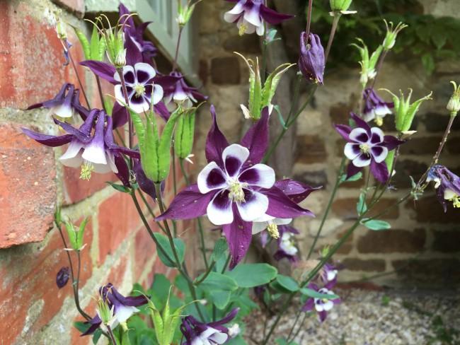 Flowers_16_resized