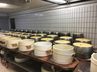 Alla scoperta del Parmigiano Reggiano