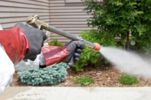 Power-Spray Program