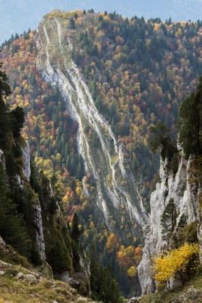 Les strates de calcaire se font absorber par la forêt aux milles couleurs