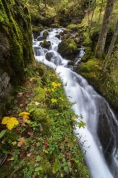 La cascade du Bruyant ronfle déjà peu après la source qui jaillit de la roche