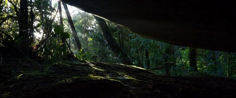 Le soleil s'invite entre les arbres et blocs rocheux pour éclairer la végétation