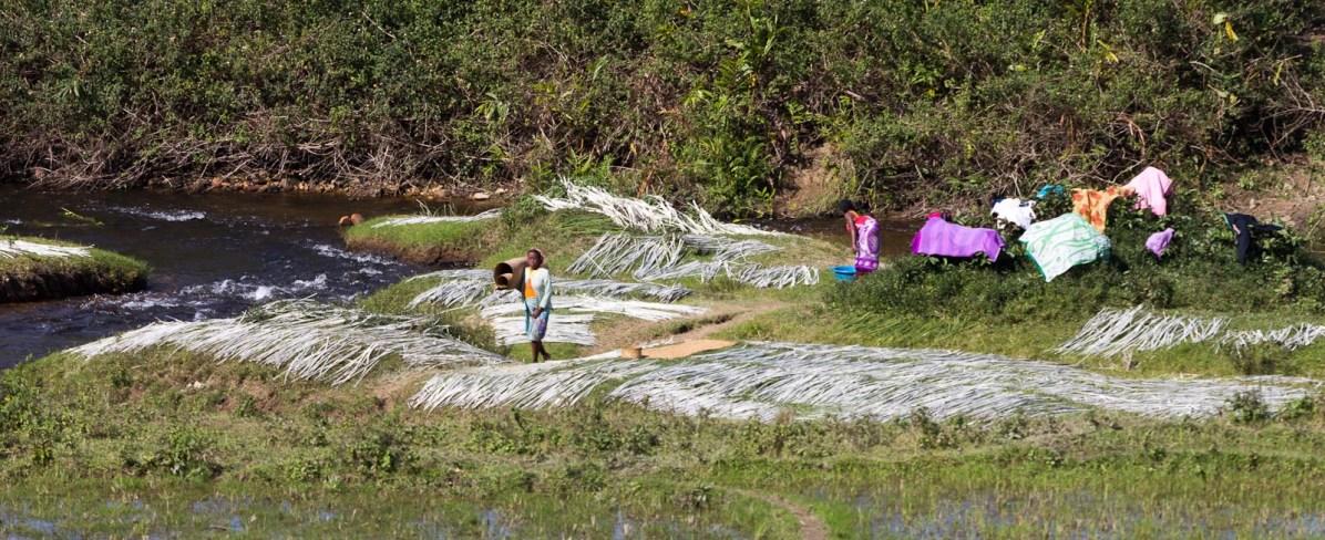 On fait sécher le linge et des fibres végétales