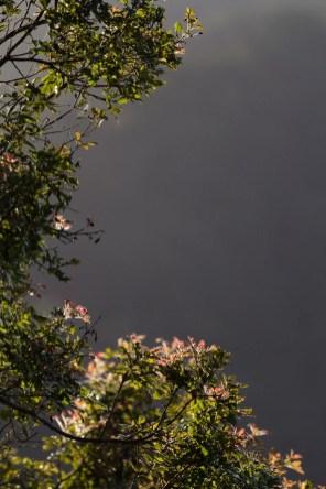 Les feuilles distales de cet arbre semblent être les seules victimes d'un simili automne