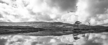 Îlot arboré du Loch Assynt