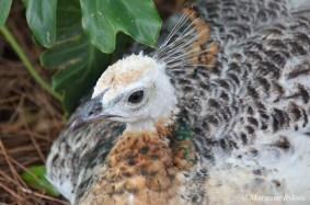 Gatorland: Peacock