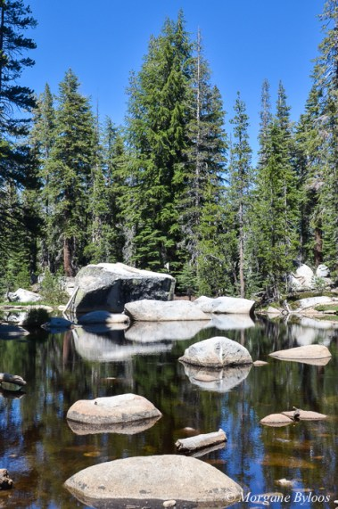 Yosemite: near May Lake
