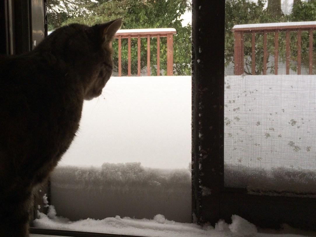 snowedin-nikki-in