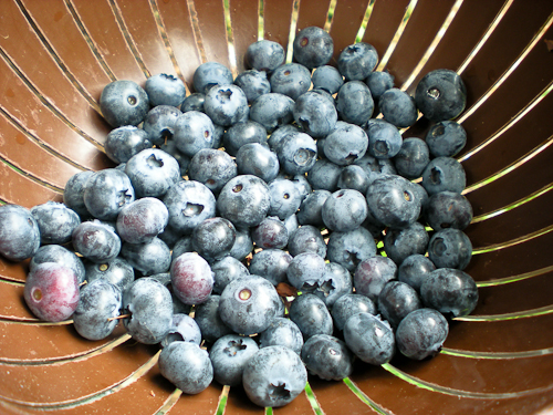 blueberrywars-6