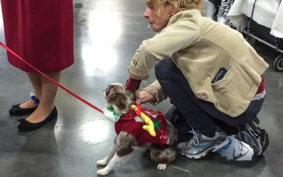 dog-dressup