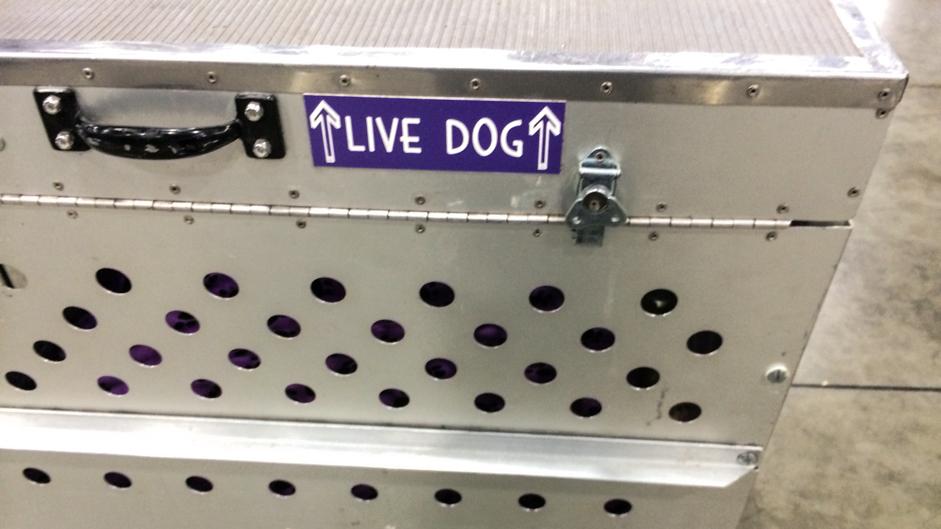 dog-livedog