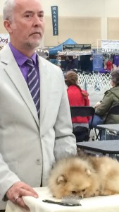 dog-purpleshirt
