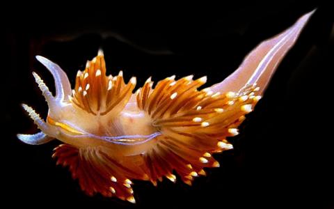 nudibranchslug.png