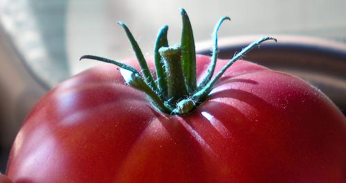 tomatooncar