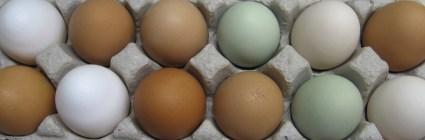 Chicken Eggs $5/dozen