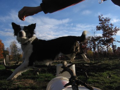 Rosie jumping