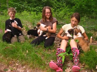 English Shepherd Puppies