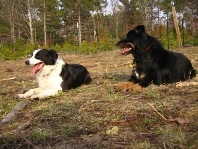 Rosie and Hawkeye