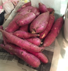 My wife and I own harvest of satsumaimo