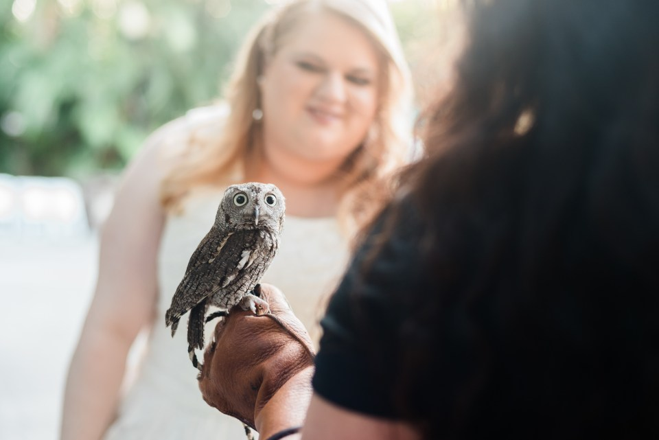 The bride meeting an owl at her Palm Beach zoo wedding.