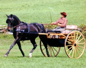 More finished carriage horse photo