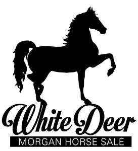 2020 White Deer Morgan Sale is accepting consignments