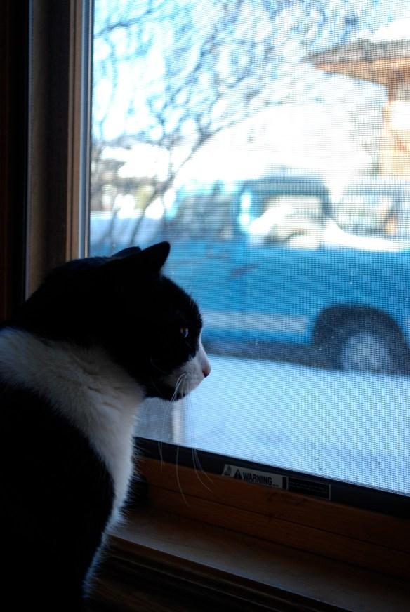 Mogwai looking out Morgan's window