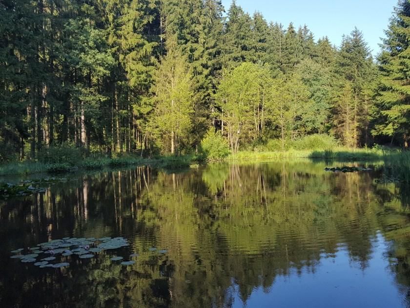 Waldsee bei Steinröd am Rand des Kobernaußerwaldes