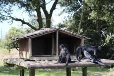 Primate 2