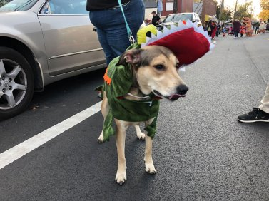 March of the Goblins, Halloween, Center Moriches: dog costume