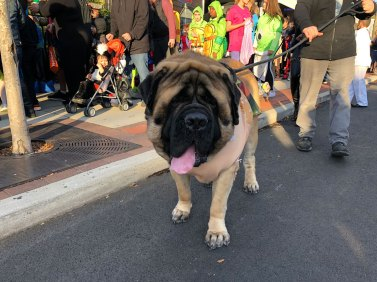 March of the Goblins, Halloween, Center Moriches: big dog