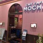 イオンモール大日に猫カフェ「MOCHA(モカ)」がオープン