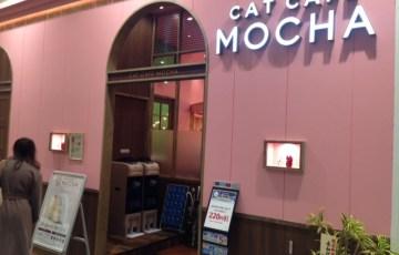 猫カフェMOCHA