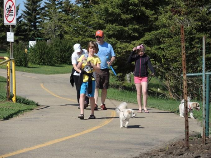 dog walk-small
