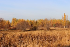 Don Boutilier - Went for a drive Oct  16  2014 (25)