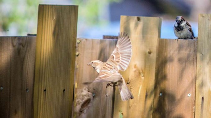 web-birds