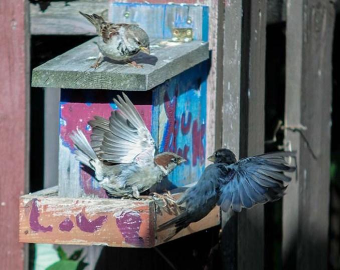 web-bird1