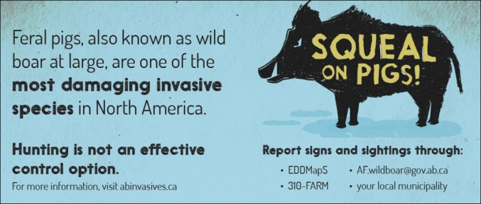 Letter: The Alberta Invasive Species Council Wants You to 'Squeal on Pigs!'