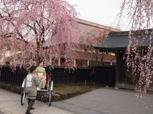 角館武家屋敷の春