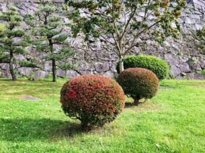 盛岡城跡公園の丸い木