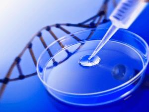 テロメア(telomere)が決める寿命
