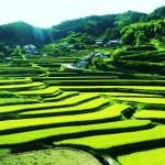 日本の遺産「棚田」と「あぜ道」